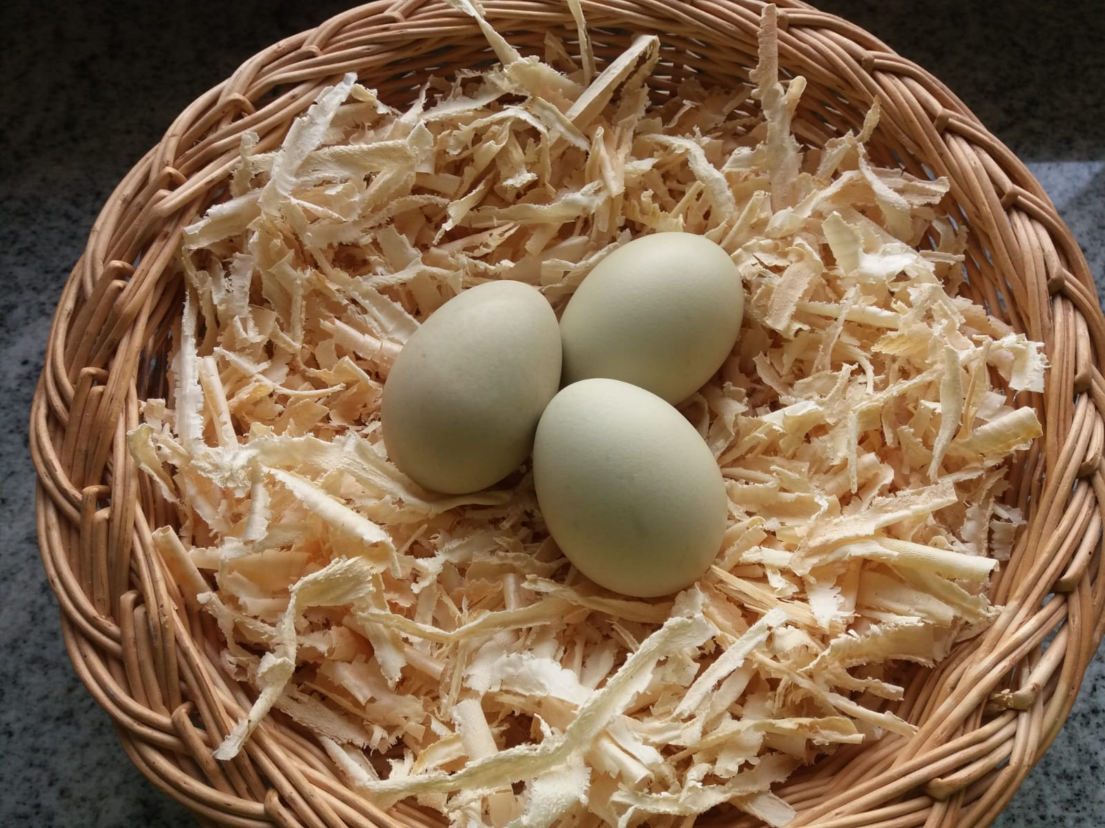 01-grne-eier-von-den-maran