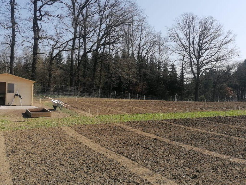 Fertigstellung der Beete und der Gartenhütte