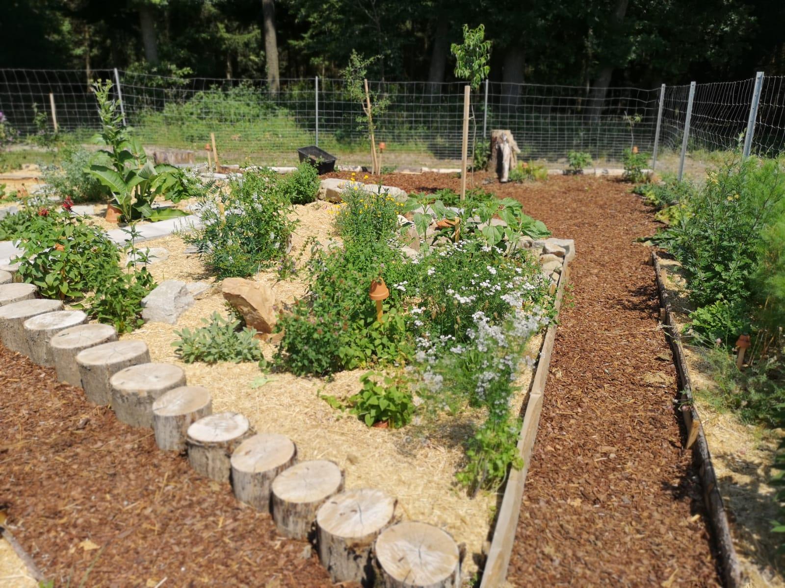 Ein artenreicher Kräutergarten ist entstanden